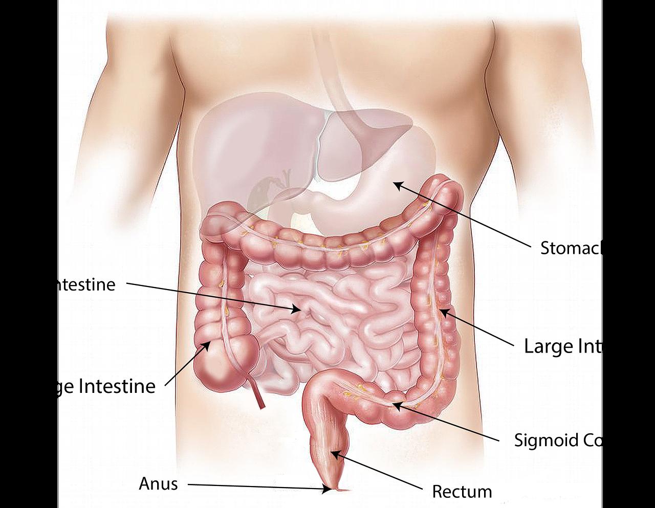 肠胃病医生