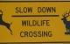北美驾车,撞到野生动物怎么办?造成的车损,保险要怎么赔? 综合意外险(Comprehensive)