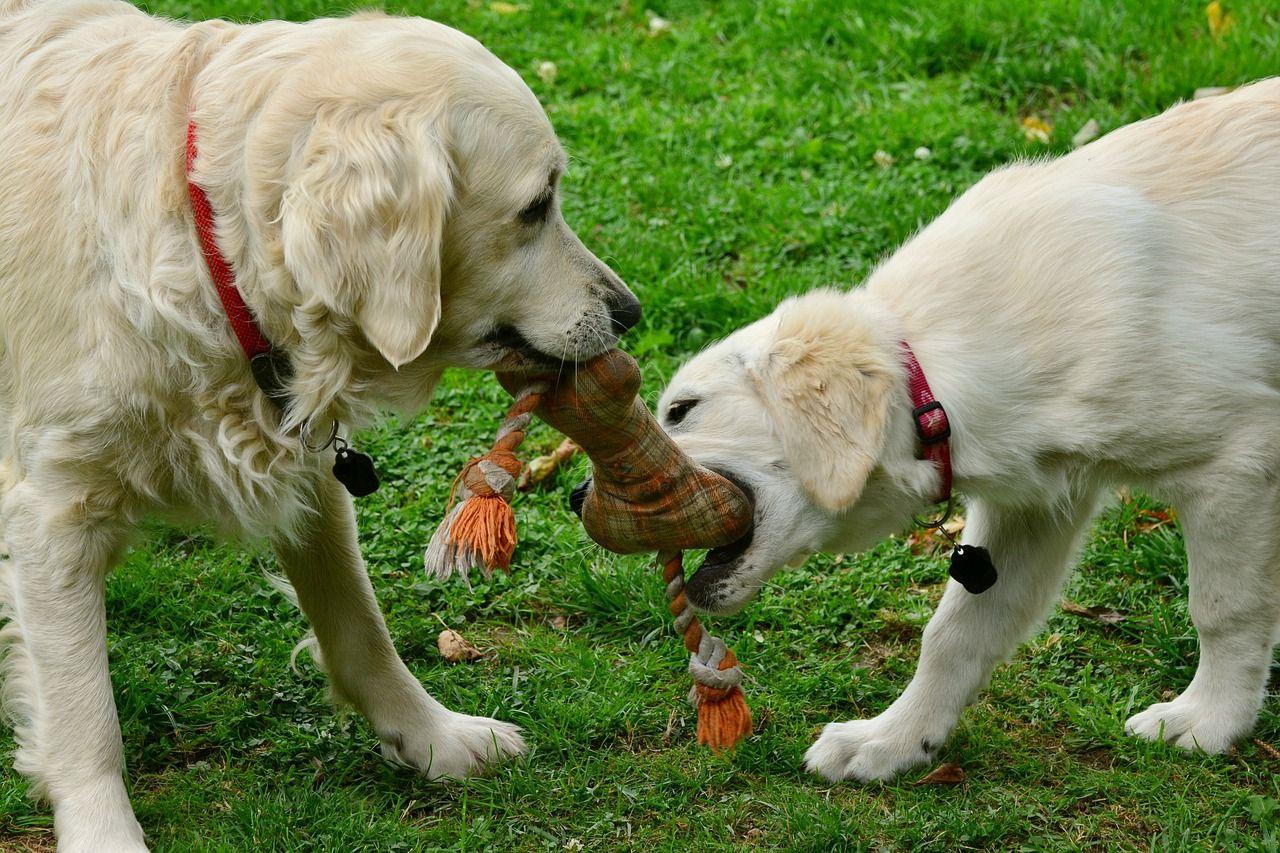 挑选宠物玩具好烦心?家有宠物的主人看过来,购买宠物玩具的三个小秘诀