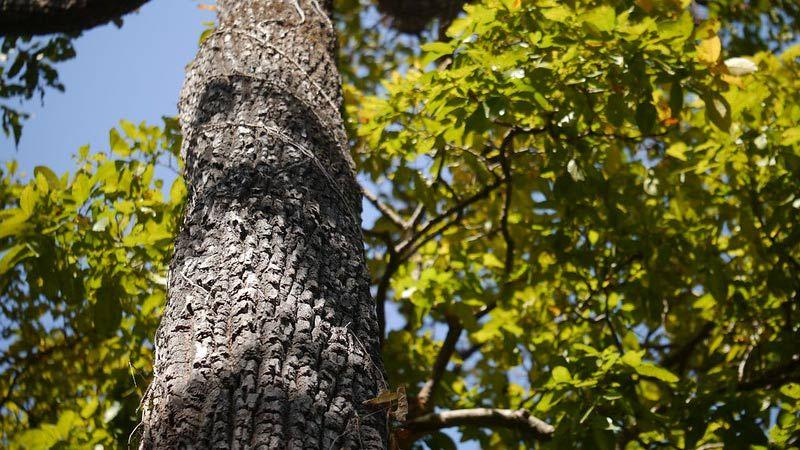 趣闻!「鳄鱼皮」里流出饮用水——丛林生存最佳助手 震惊网友